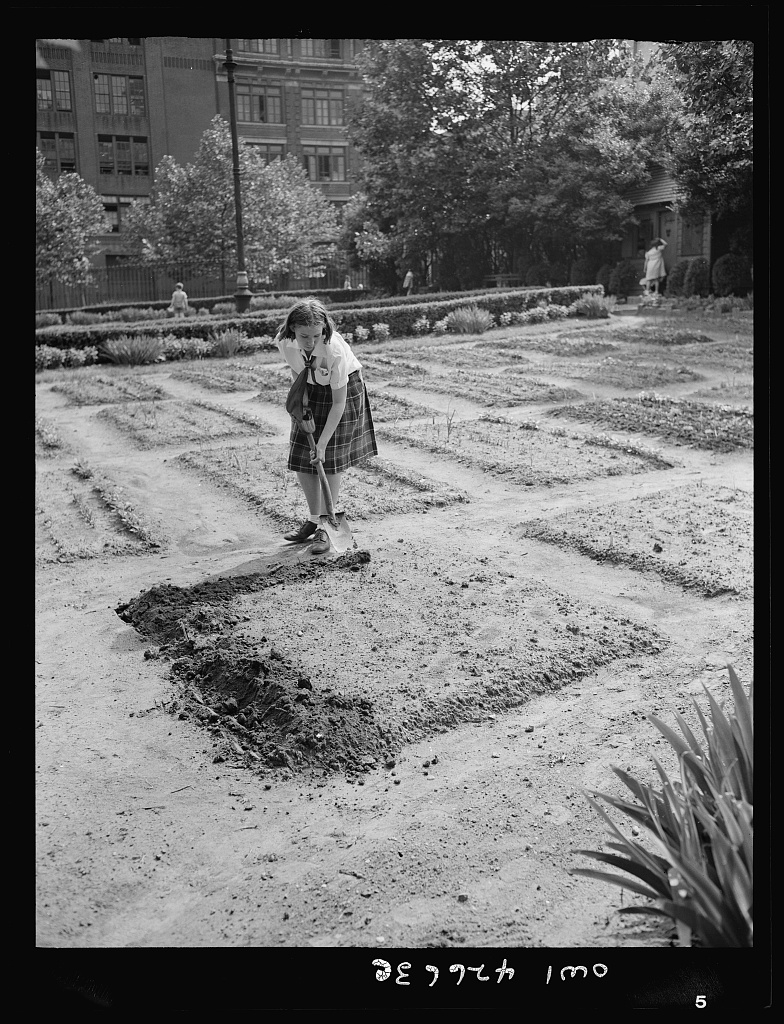 Children's school victory gardens on First Avenue between Thirty-fifth and Thirty-sixth Streets.Library of Congress