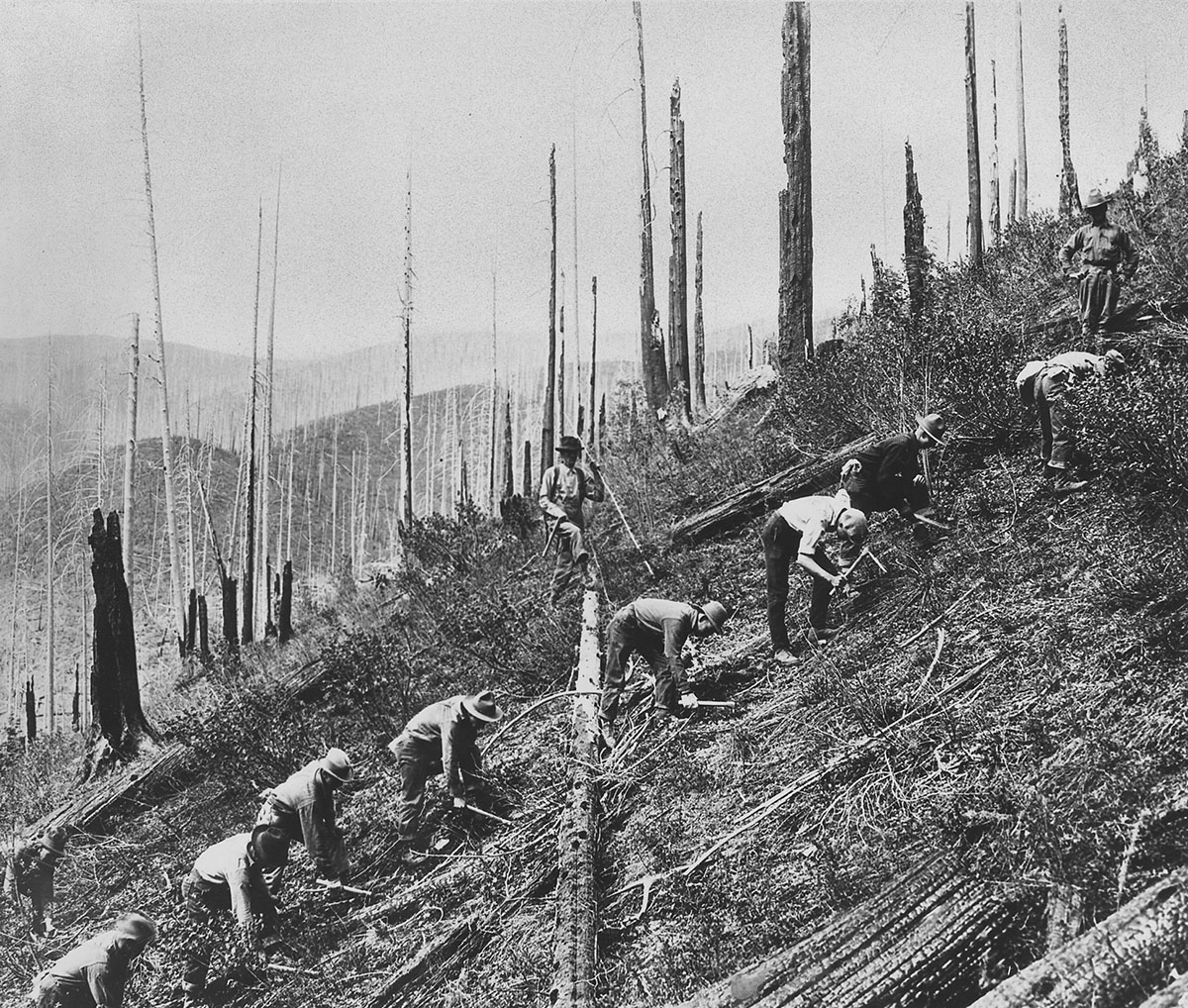 """Civilian Conservation Corps (CCC) enrollees clearing land, around 1934. The CCC—popularly known as """"Roosevelt's Tree Army""""—was perhaps the nation's first green jobs program. It sent unemployed Americans to work in national parks and forests clearing brush and dead vegetation, planting trees, building firebreaks, and improving campsites. Courtesy, National Archives"""