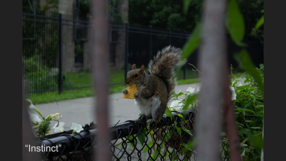 JJ:  We know some of these topics are quite serious so we added this picture for a little levity, or comic relief. This squirrel posed for us for minutes while he enjoyed his Dorito. A great example of freedom from want.
