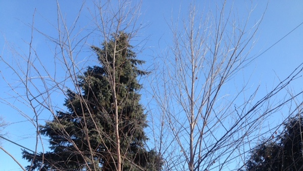 Bare Branches.png