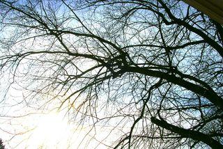 Light for cold.jpg