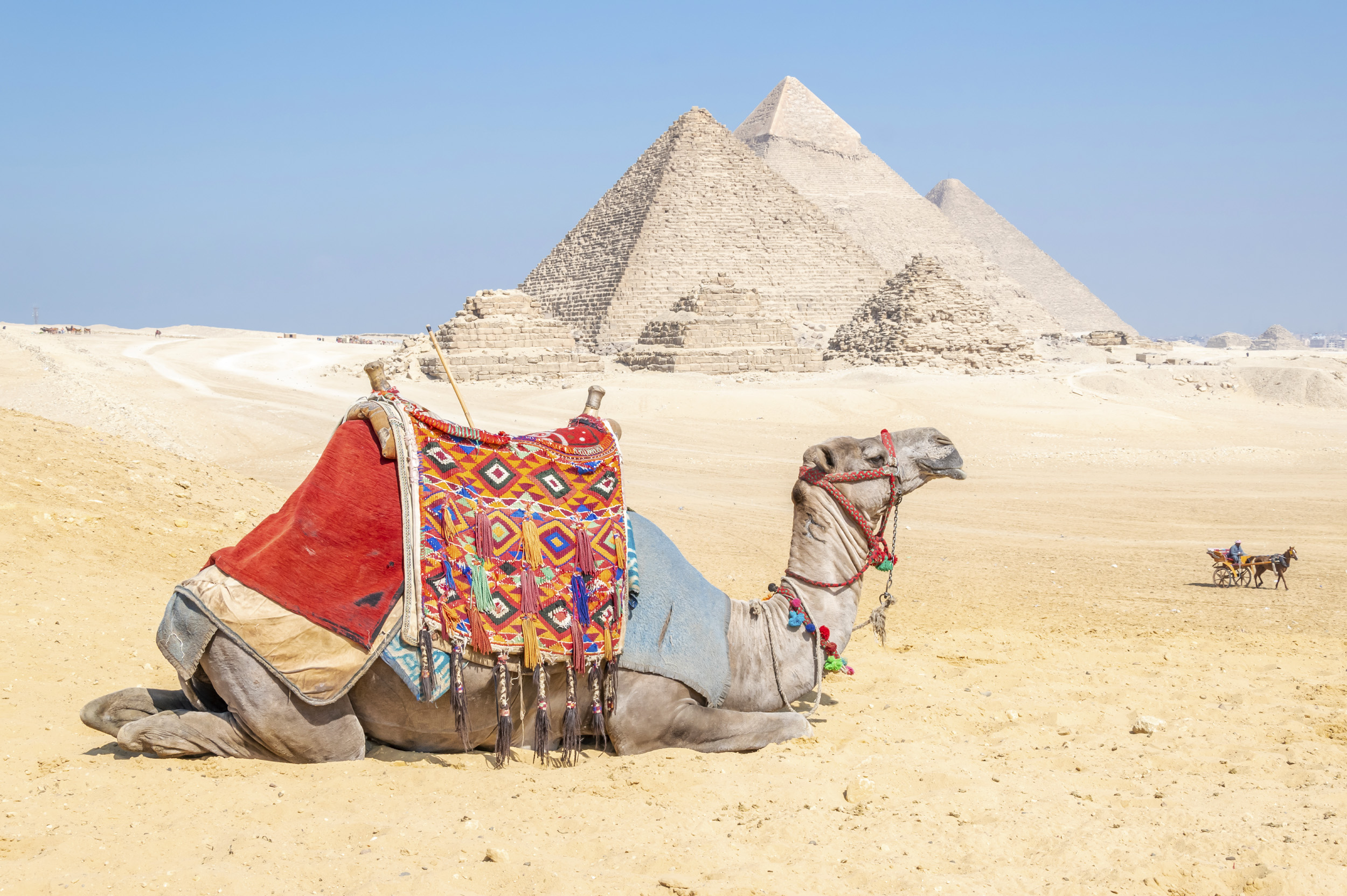 Camel resting by the Pyramids - Giza, Egypt