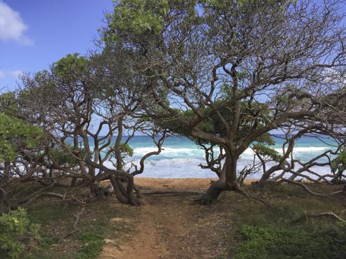 Approaching Donkey Beach through the Ironwood Trees