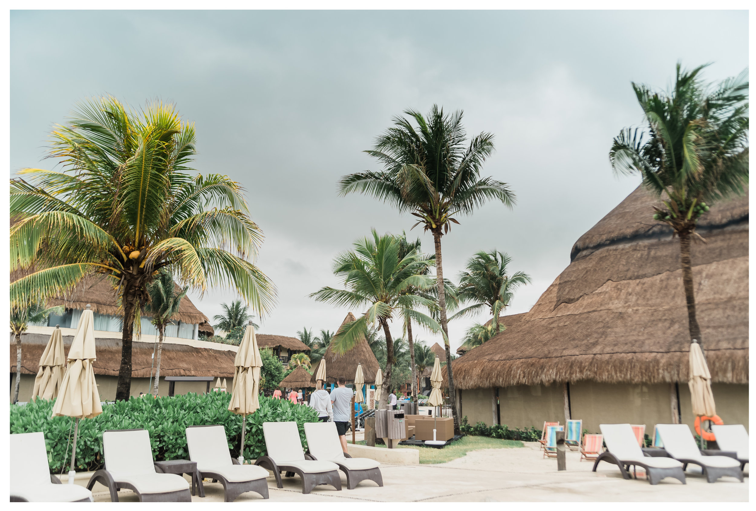 palm trees at the riviera maya Catalonia resort in Cancun Mexico for destination wedding