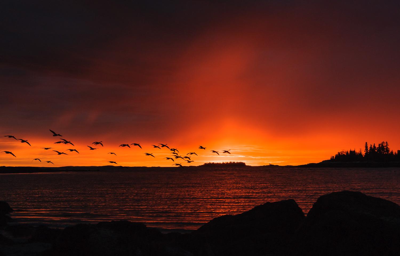 Sunrise at Lobster Buoy Campsite, South Thomaston