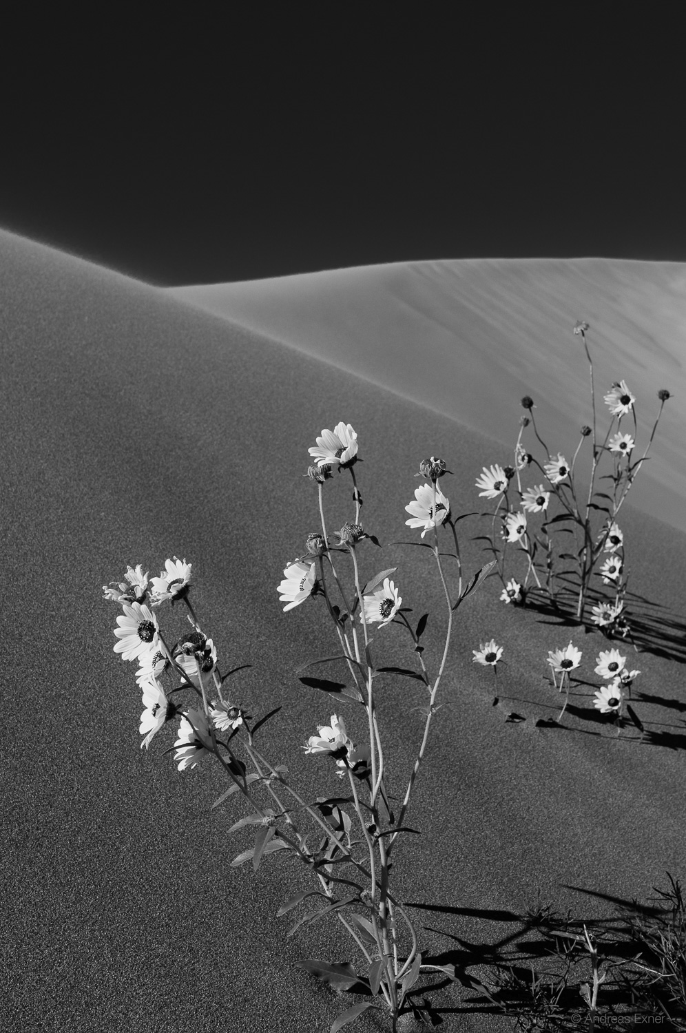Living on the edge - Great Sand Dunes National Park, August 2014  Nikon D300s, Nikkor 24-120mm / f4, at 48 mm, 1/750s, f8, ISO200