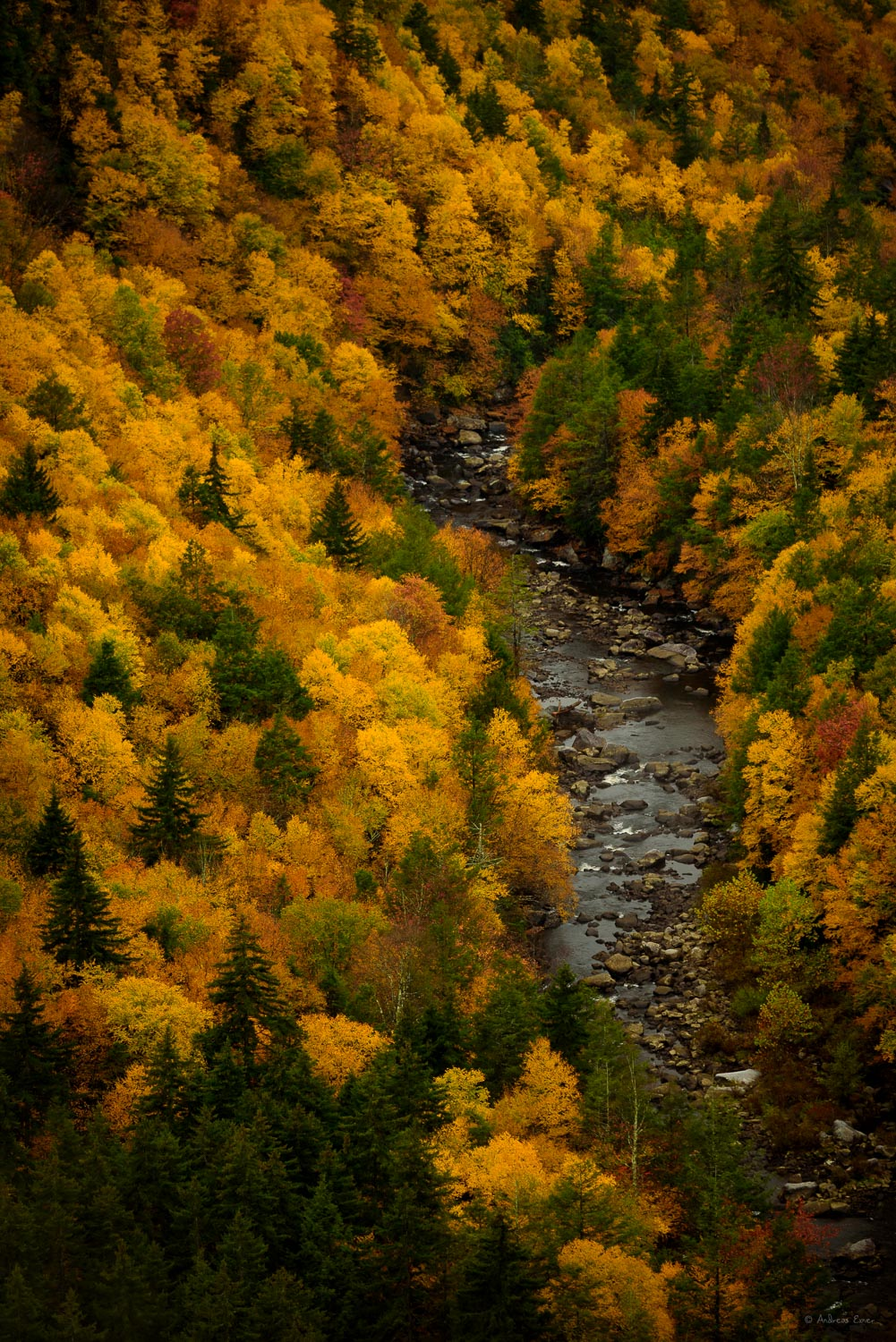 Canyon of the Blackwater River, Blackwater Falls State Park, West Virginia