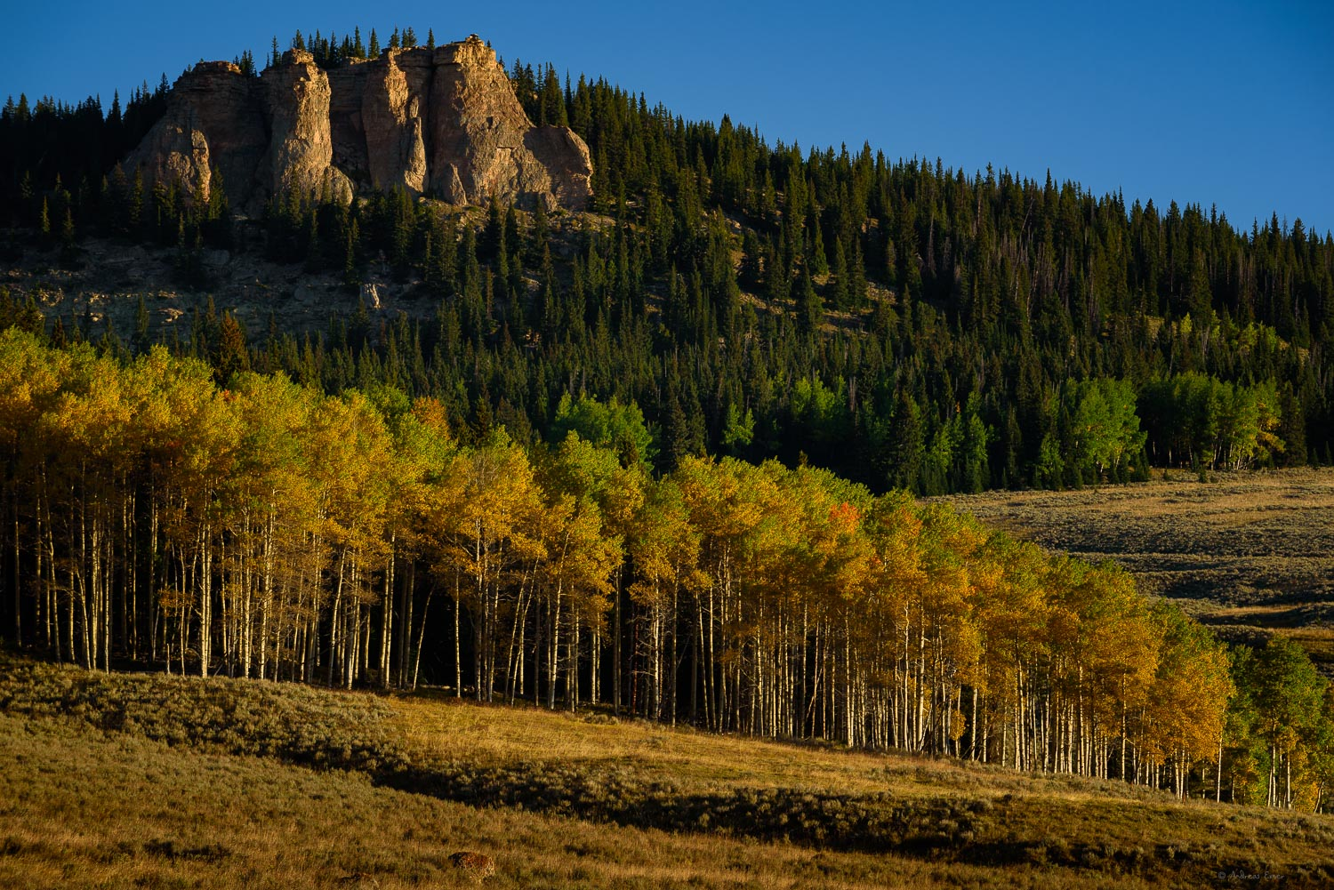 Morning in the Bighorn Mountains, Wyoming