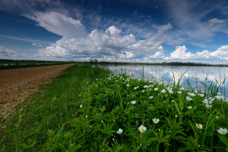 Green Island Wetlands, Mississippi Valley, Iowa