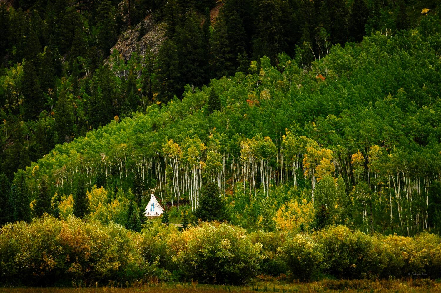 Tipi between aspens, Ashcroft, Colorado, 2014