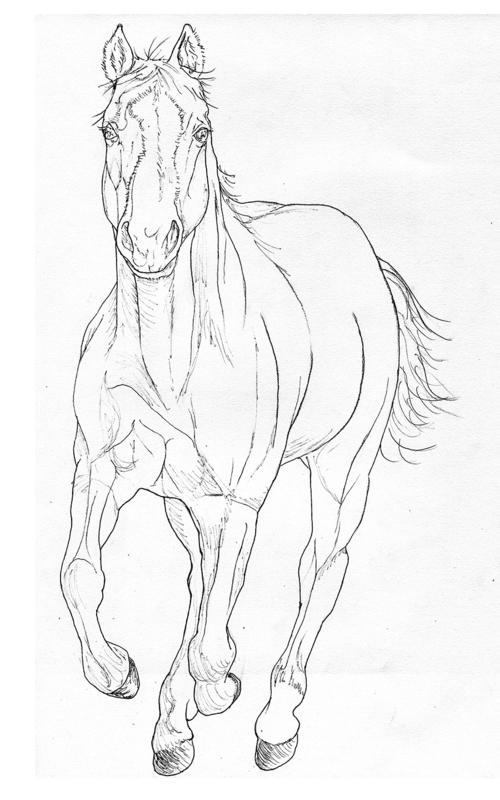JJ_horse_Pen_smaller.jpg