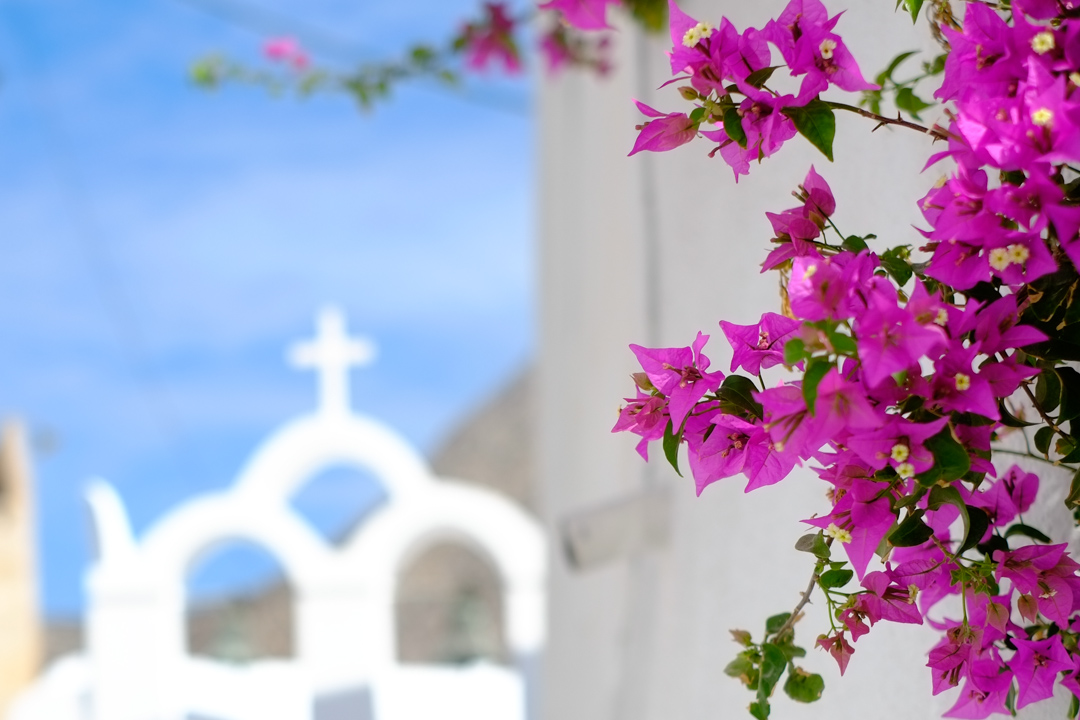 Greece (1) - Flowers with white buildings in Santorini