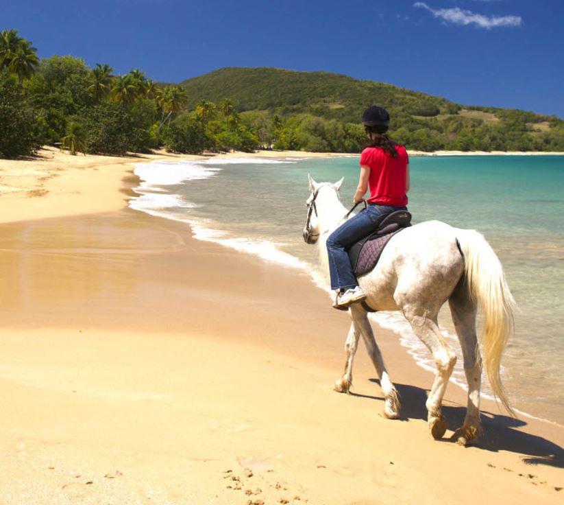 excursie paardrijden.JPG