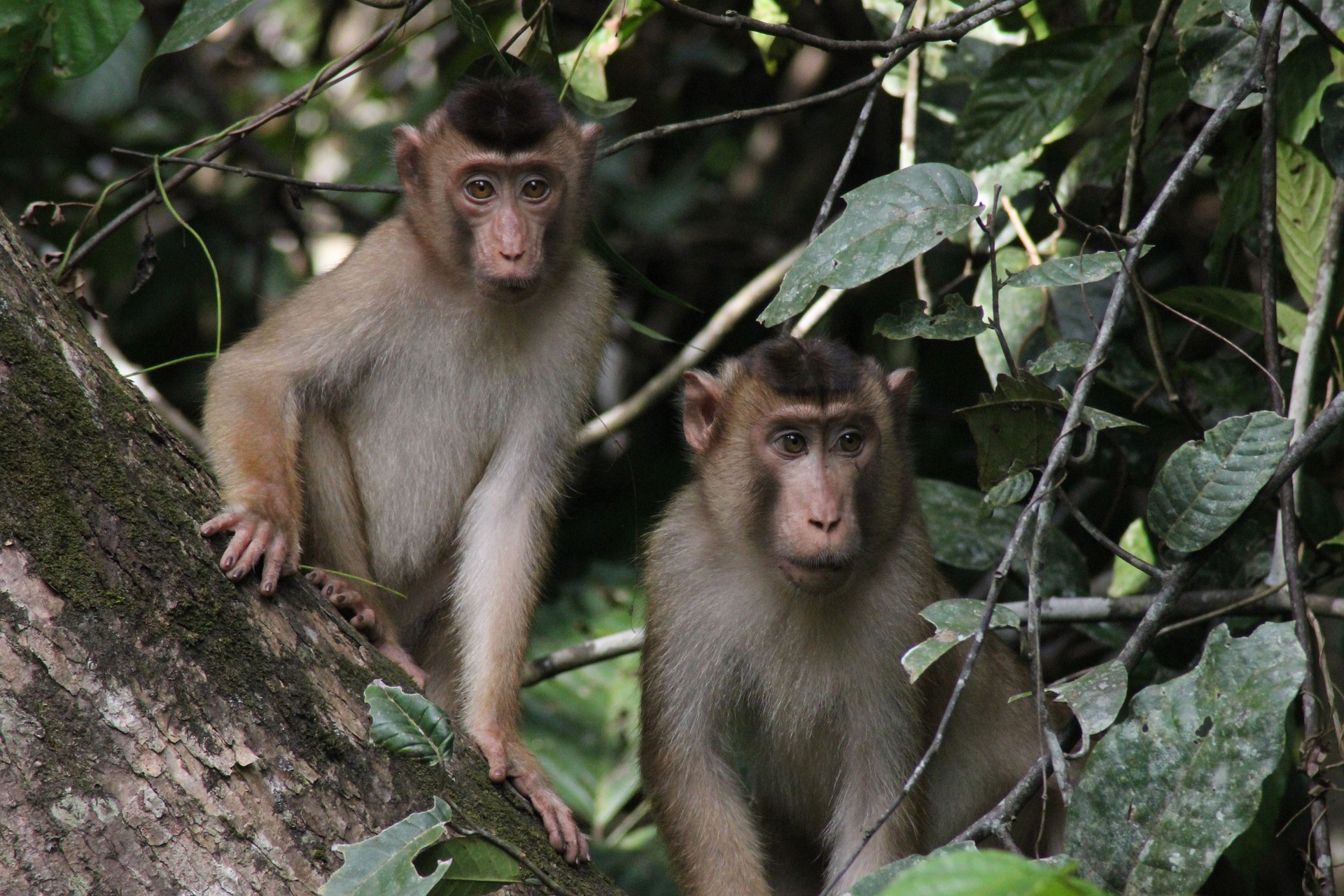 monkeys-1351743_1920.jpg