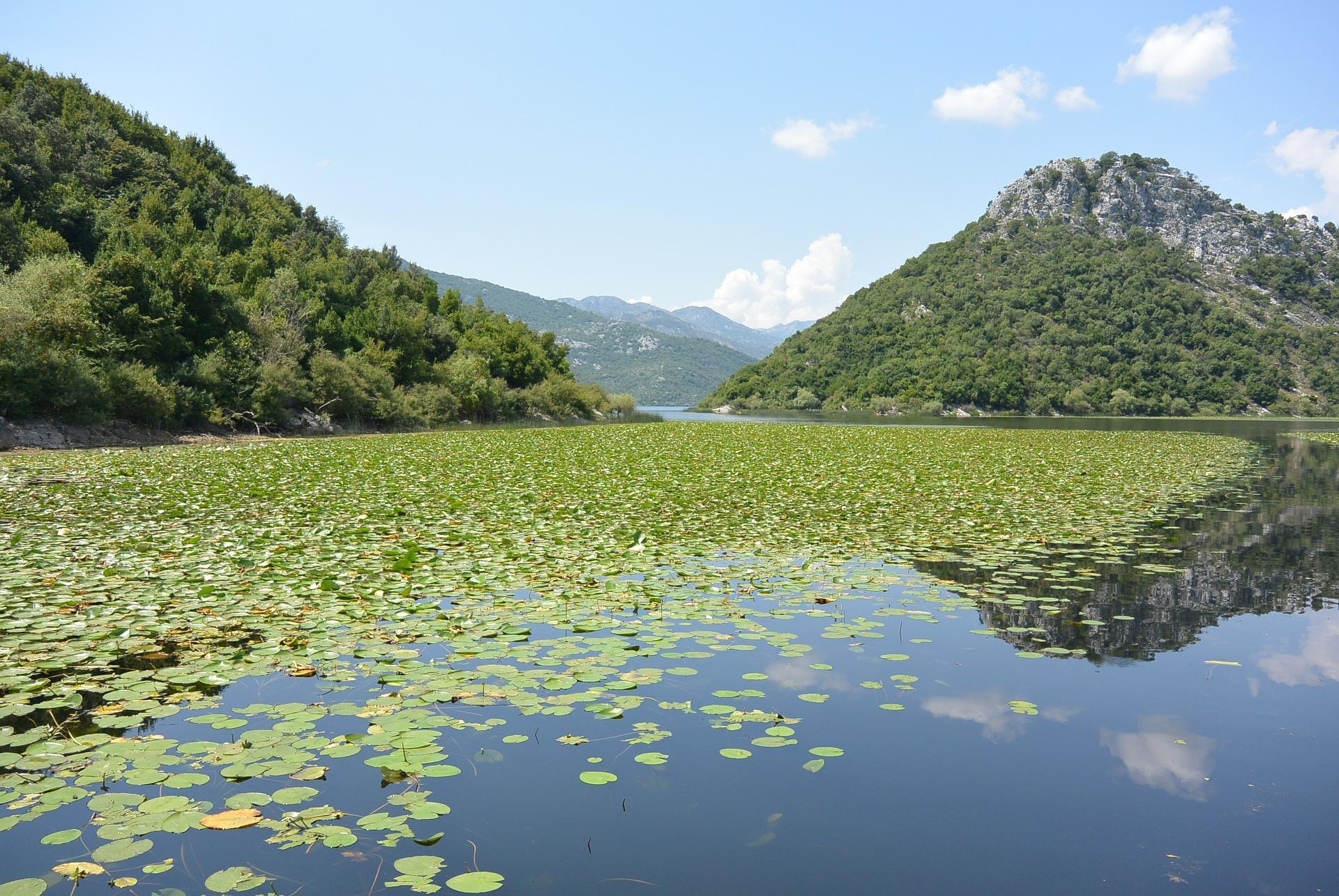montenegro skadar-lake-469973_1920.jpg