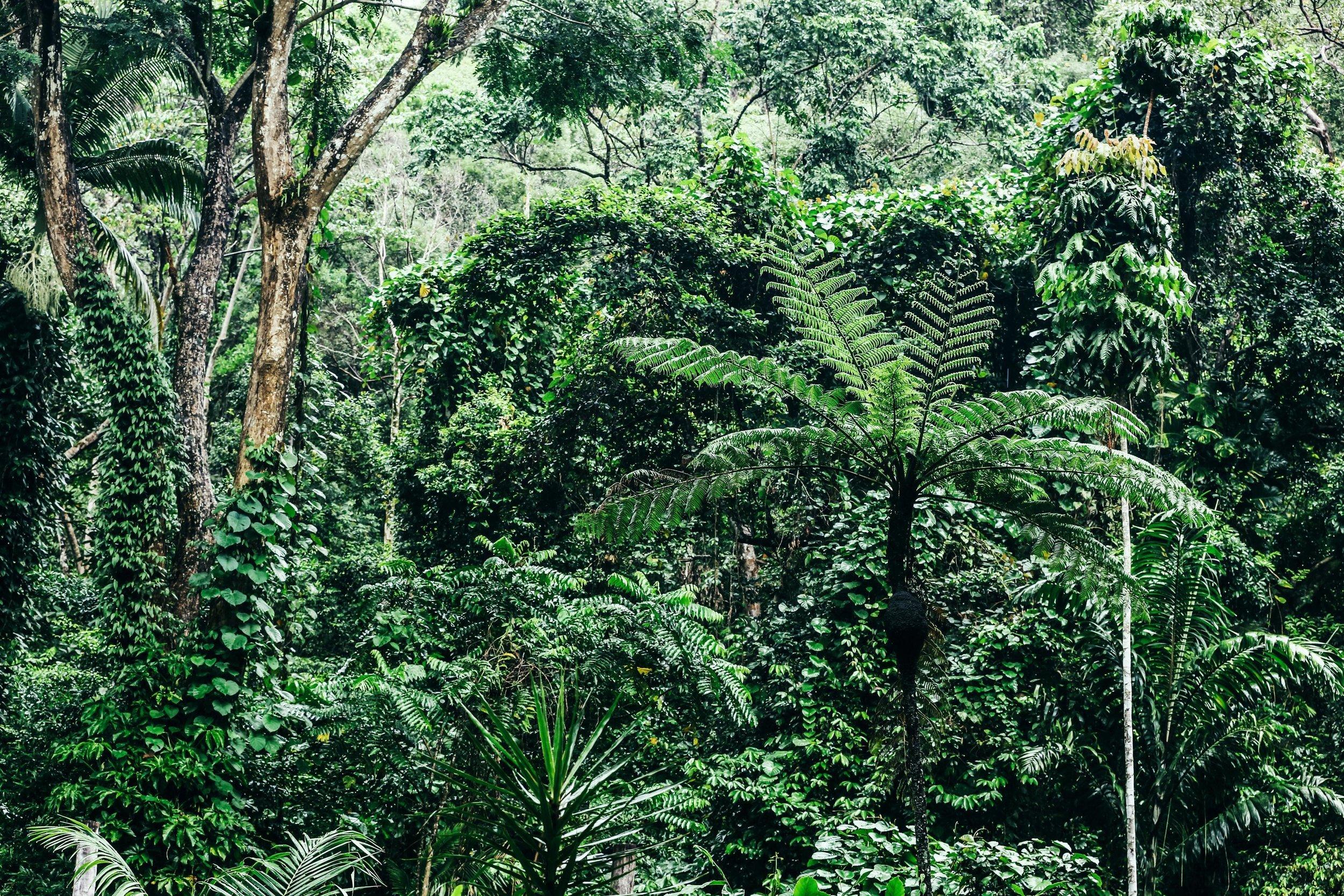 Eco-Rainforest-Lodge-0030.jpg