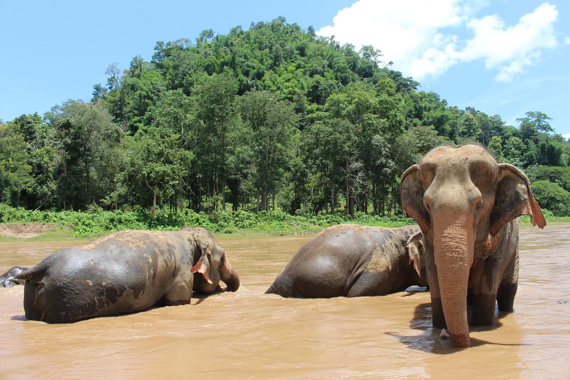 elephant-2647010_1920.jpg