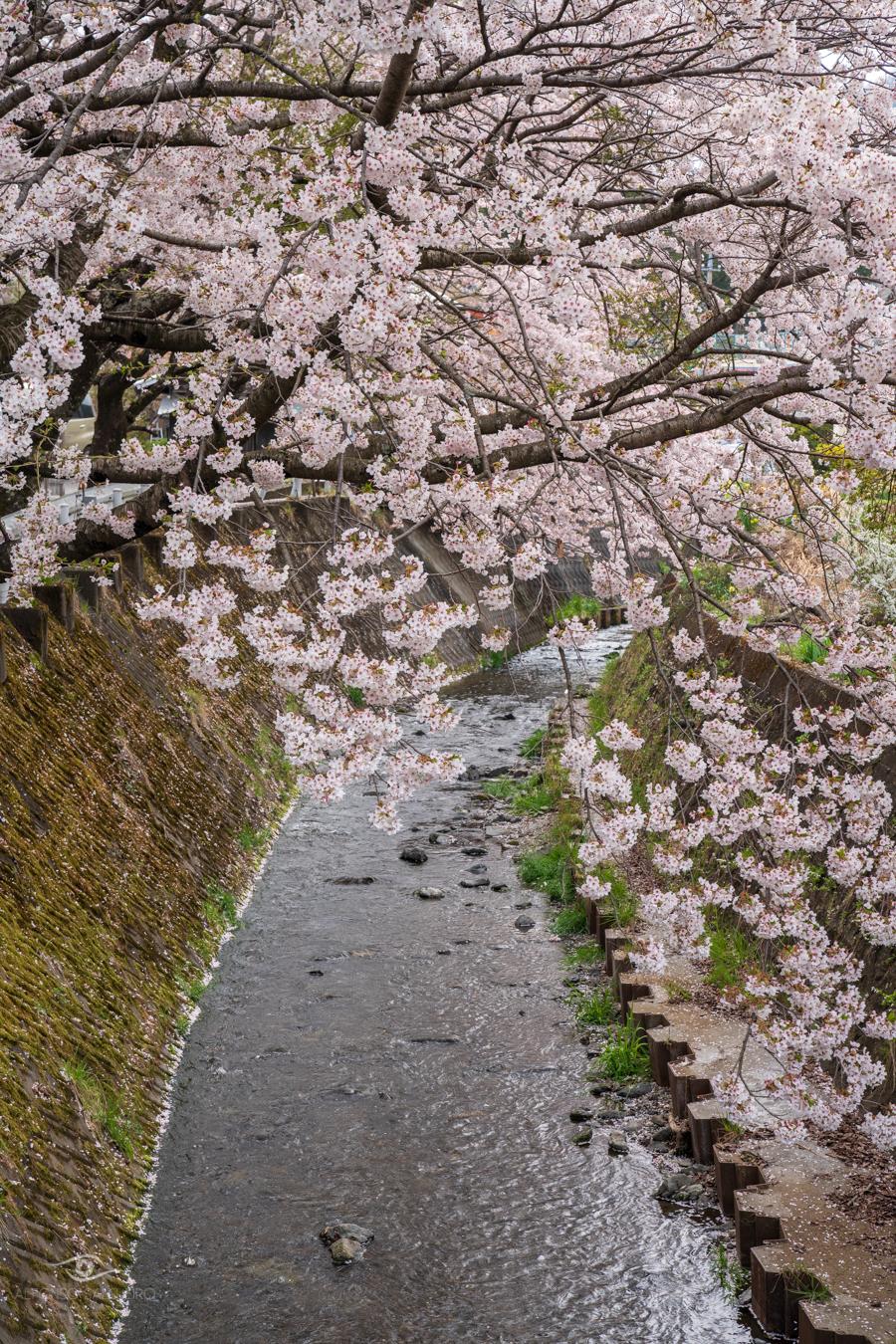 Japan - Easter 2019-19.jpg