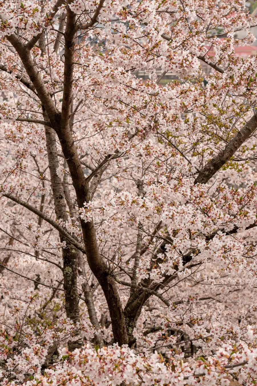 Japan - Easter 2019-21.jpg