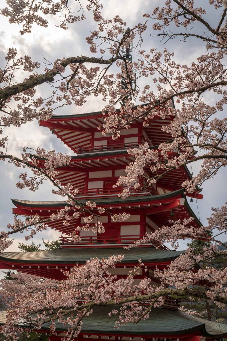 Japan - Easter 2019-23.jpg