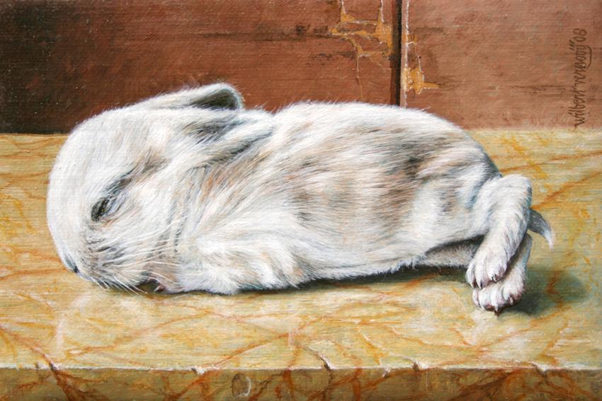 Jong konijntje | Young rabbit