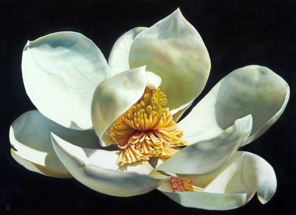 Magnolia_qjixin.jpg