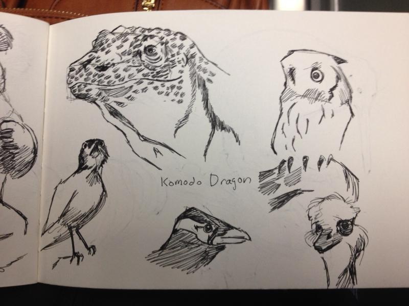 Komodo Dragon, various birds.