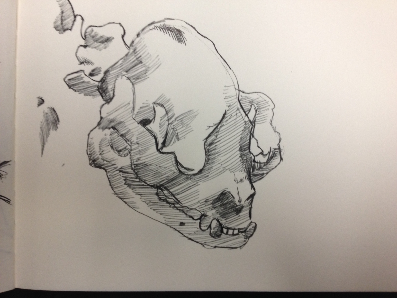 My favorite sketch of the day, Panda Skull.