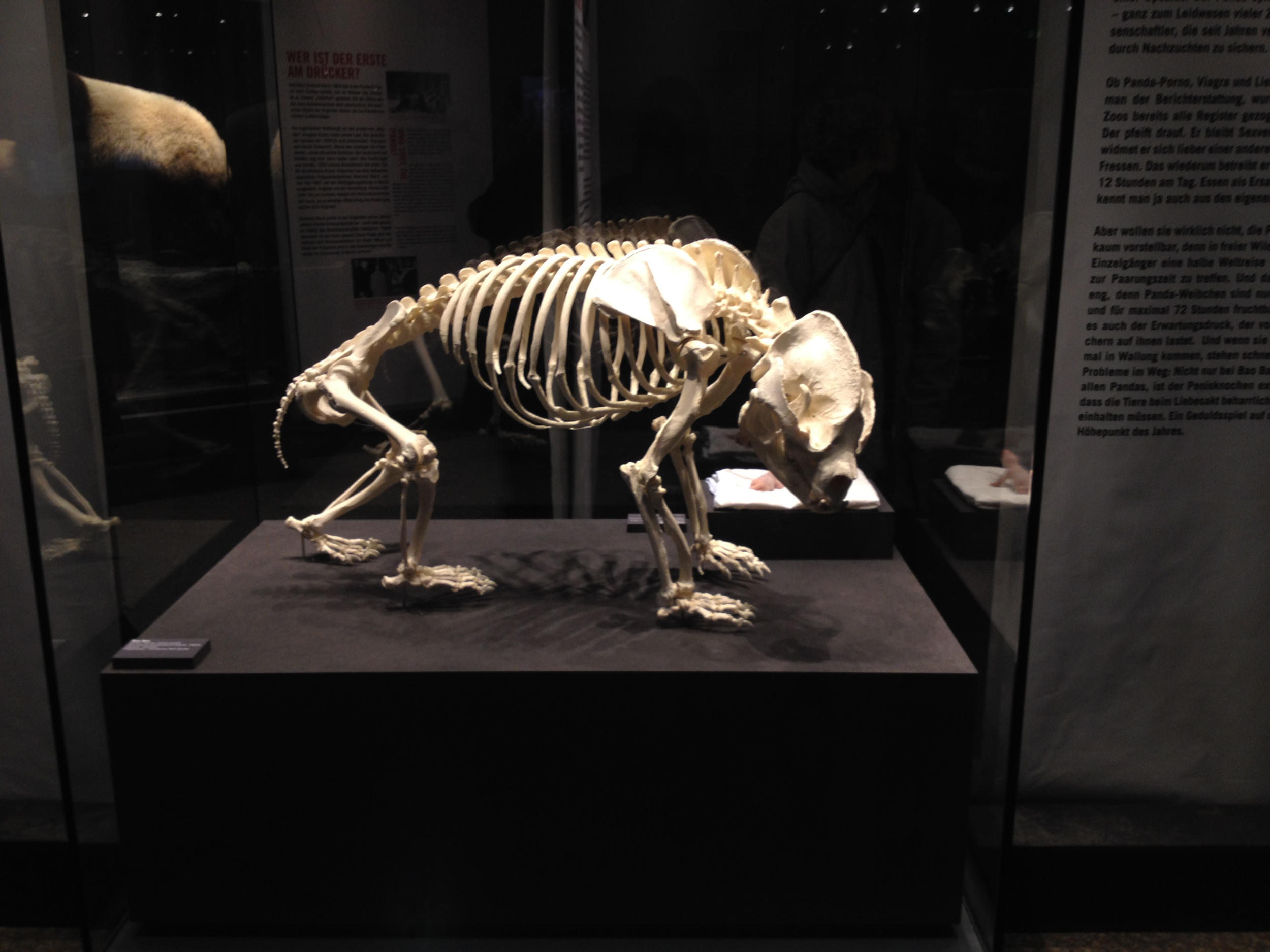 Panda Skeletion.jpg