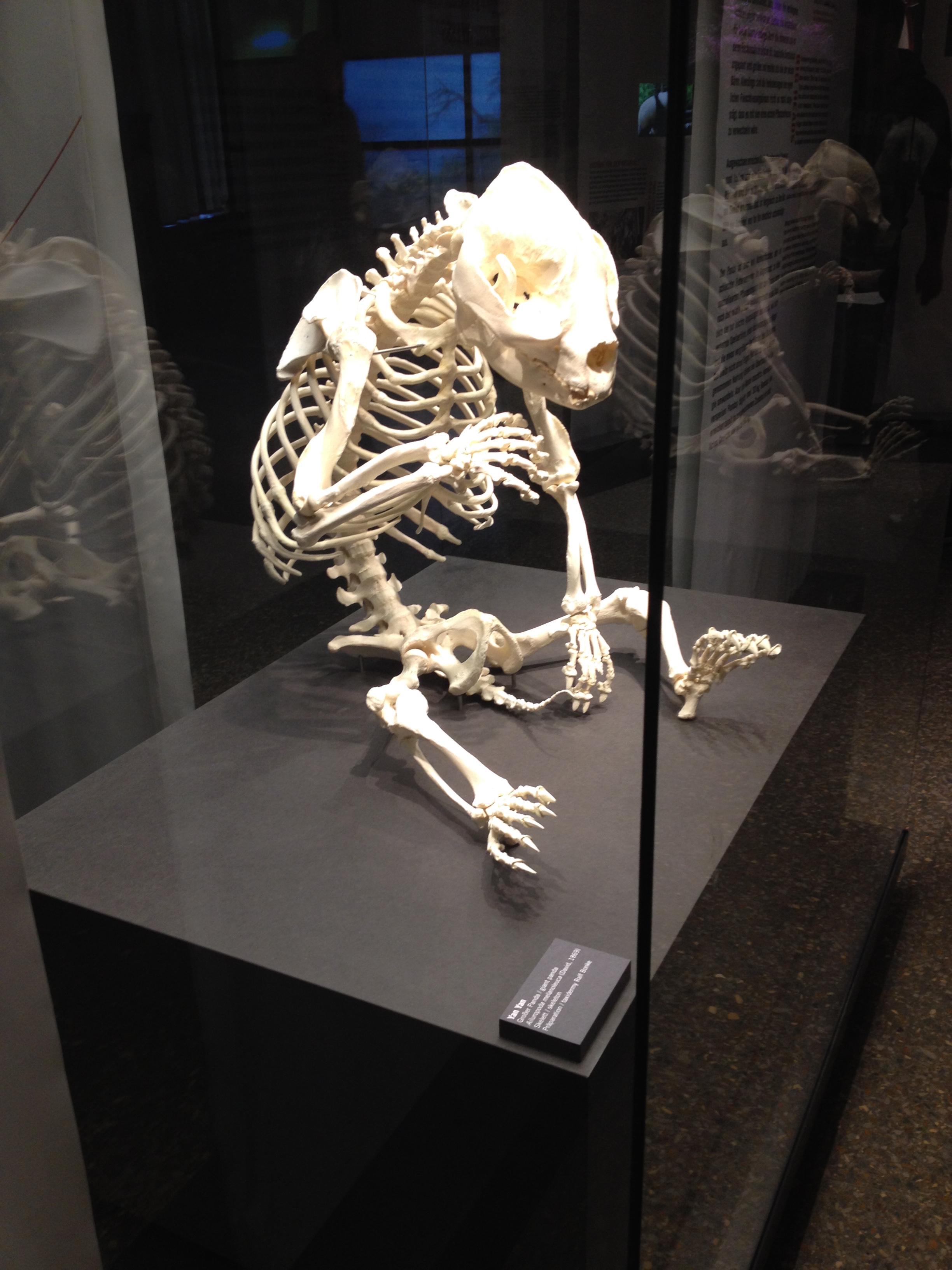 Panda Skeleton 2.jpg
