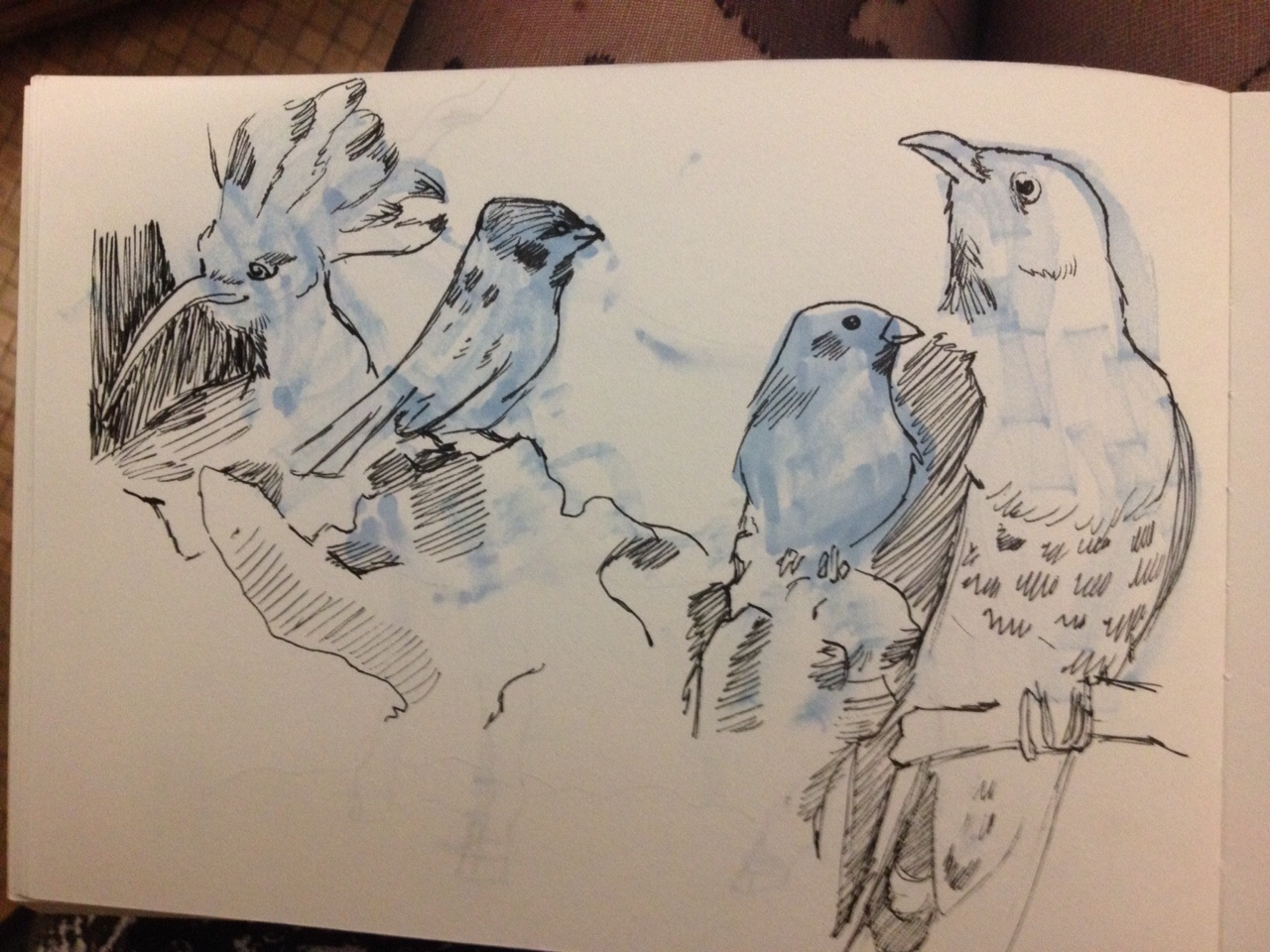 sparrows and birs.jpg