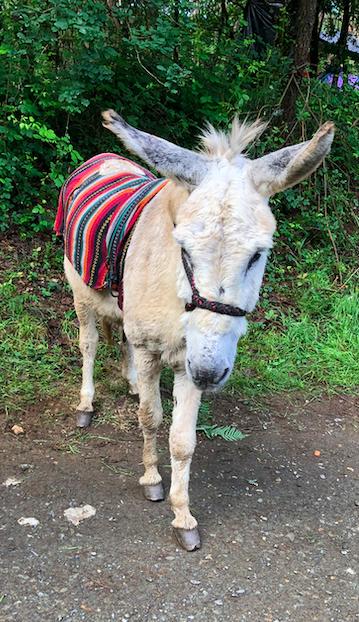 donkey .png