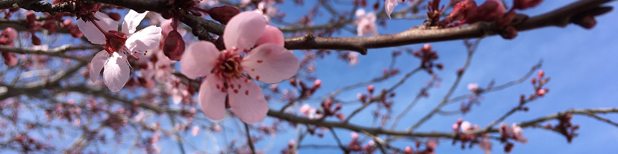 Spring (1).jpeg