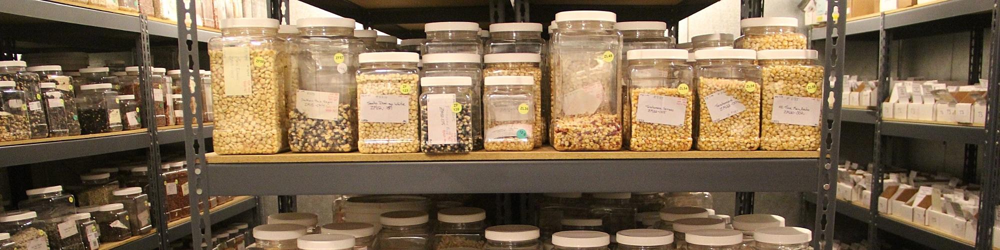 Seed Bank.jpg