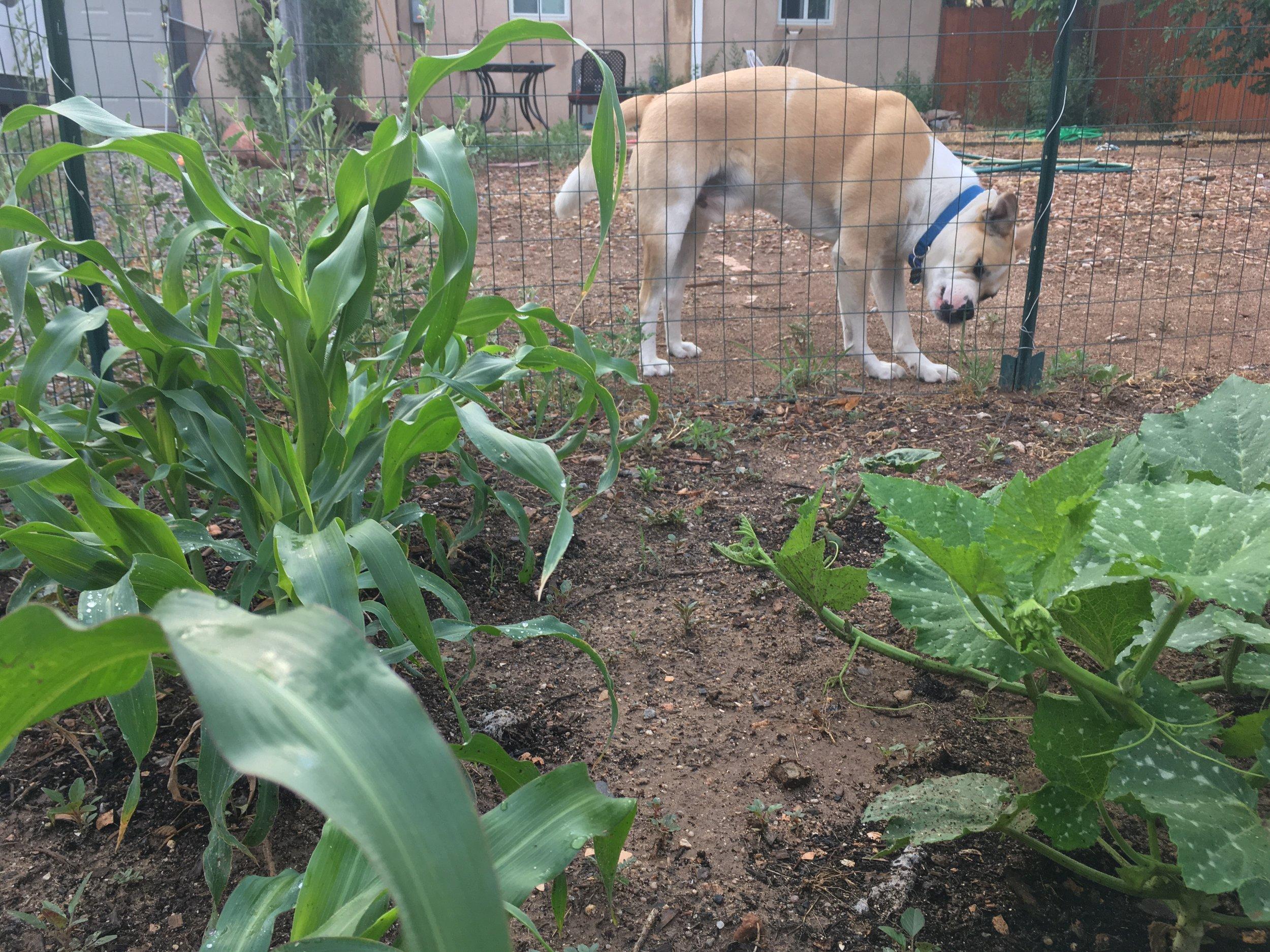 Doggo (2).JPG