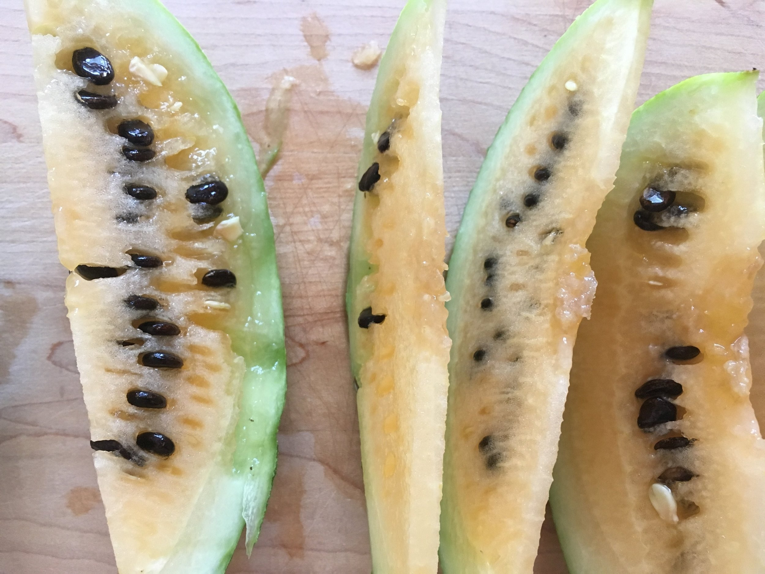 Melon dissection (2).JPG