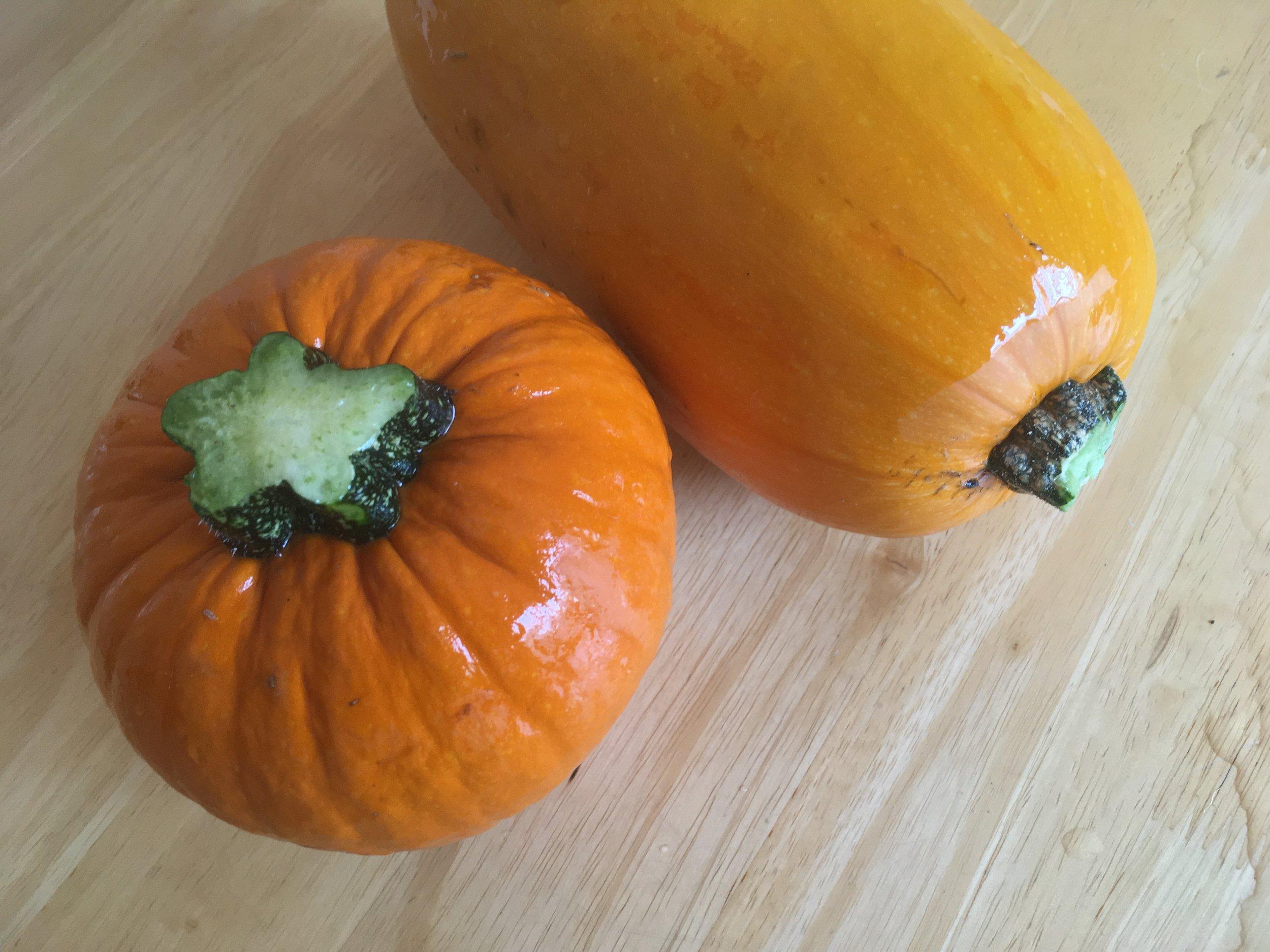 Pumpkin harvest (9).JPG