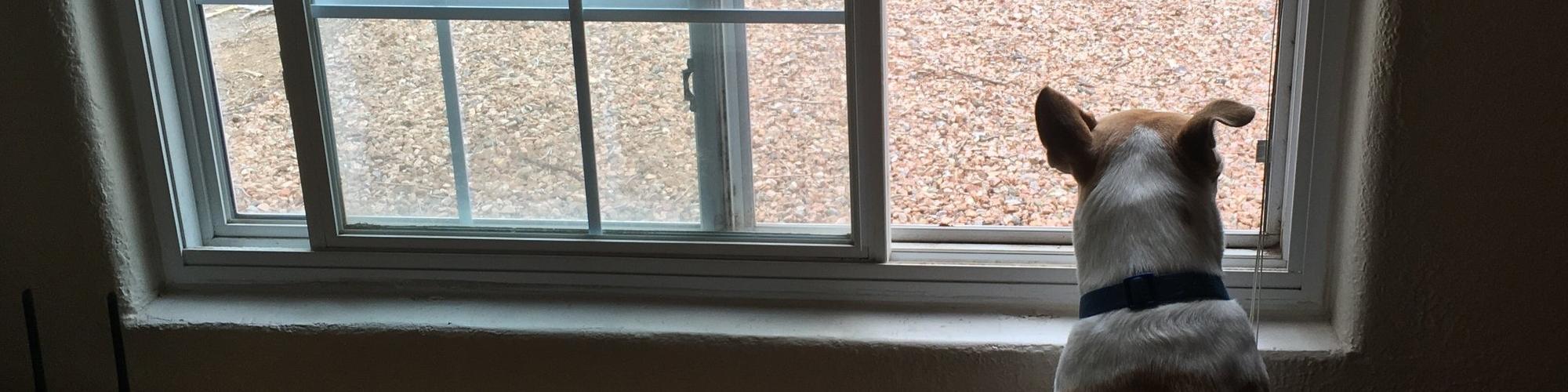 Window (2).jpg