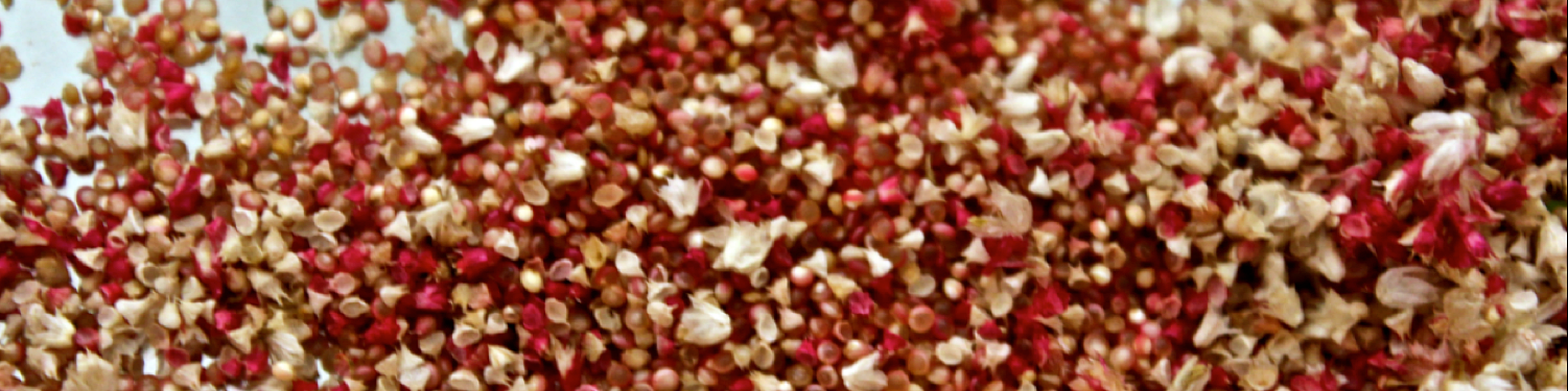 2-amaranth-seeds-and-chaff.png