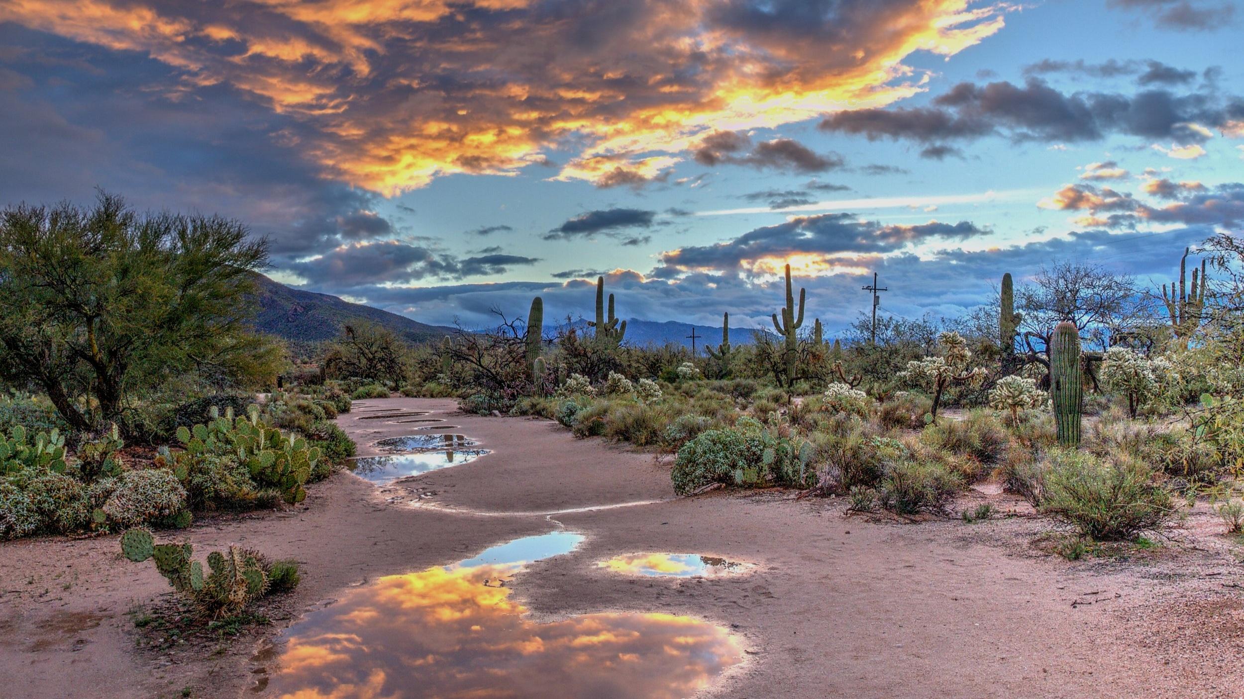 Saguaro Dulcey Lima Unsplash.jpg