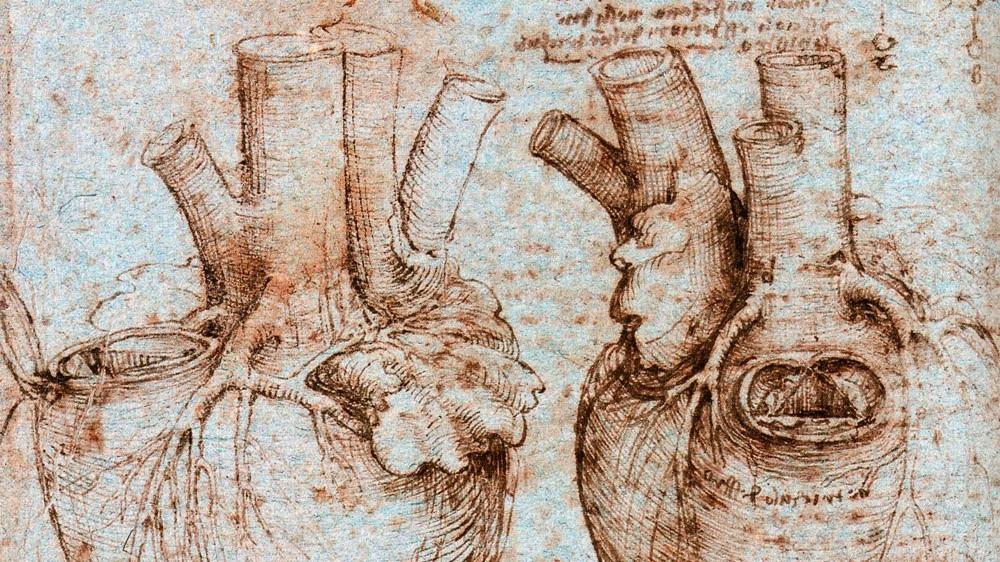 Heart Leonardo da Vinci.jpg