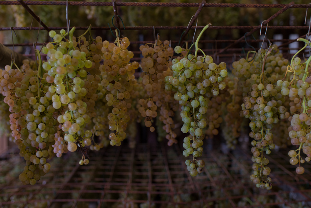 bunches of white grapes for vin santo