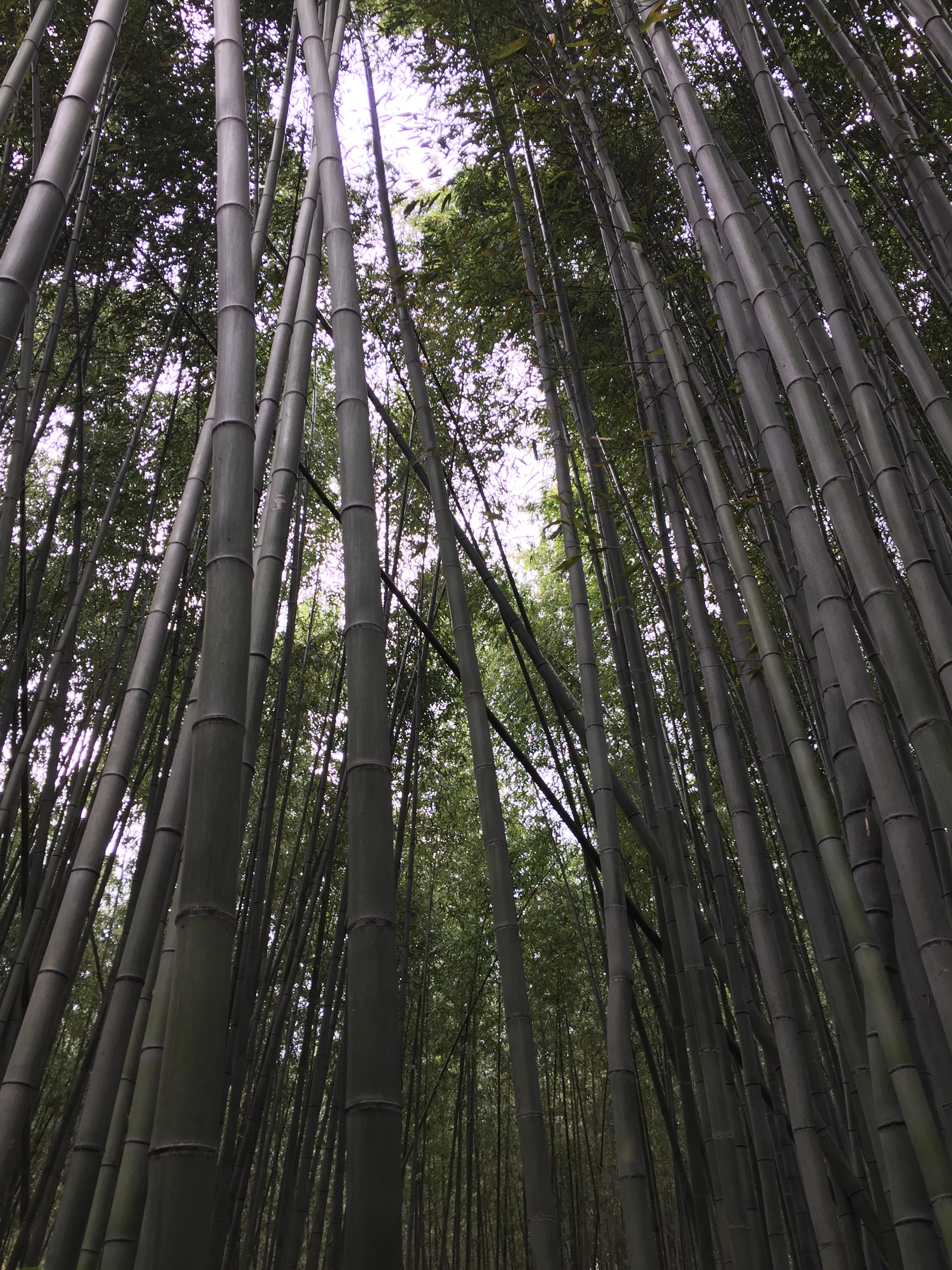 bamboo forest time