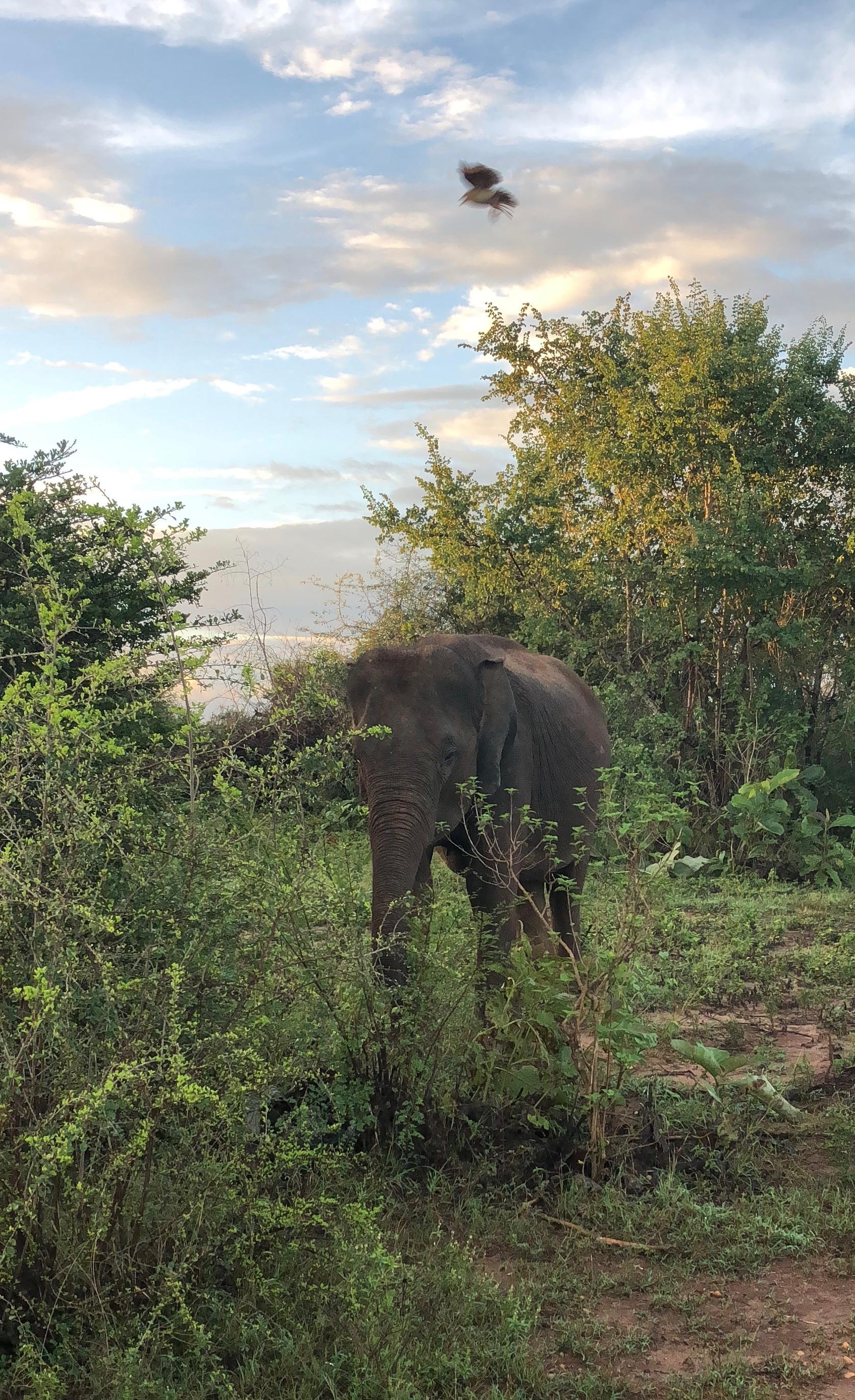 In the bush......
