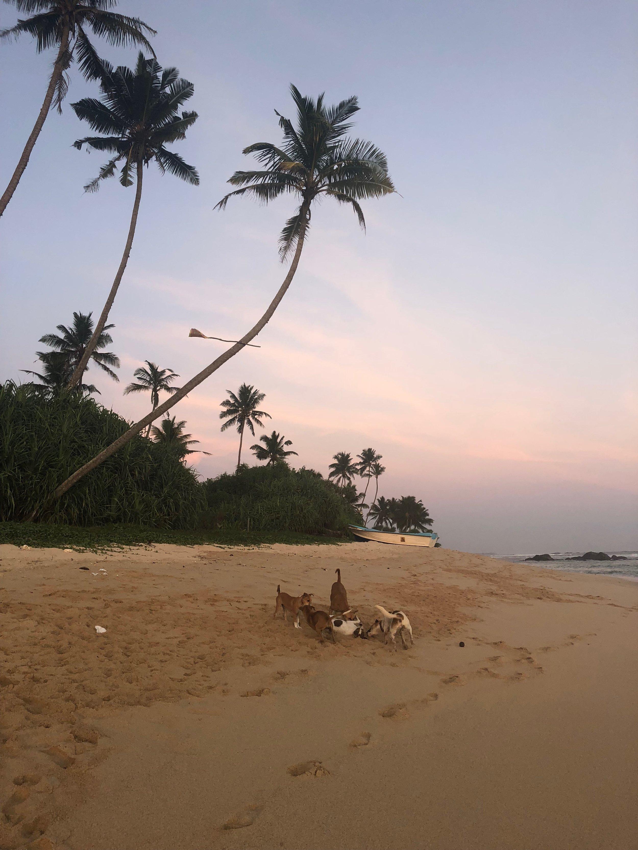 Beach life of dogs.......