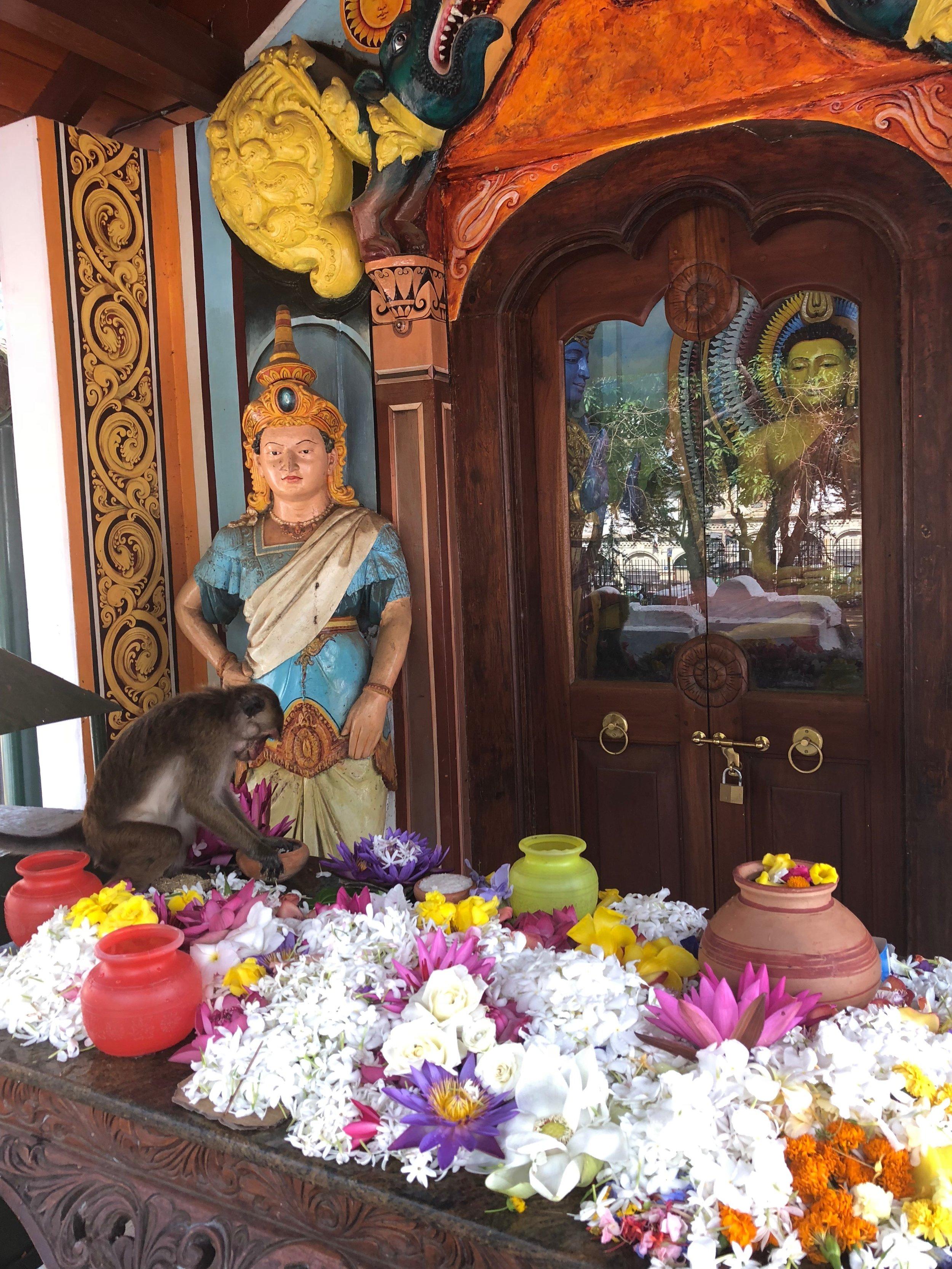 Monkey enjoying the offerings...:)