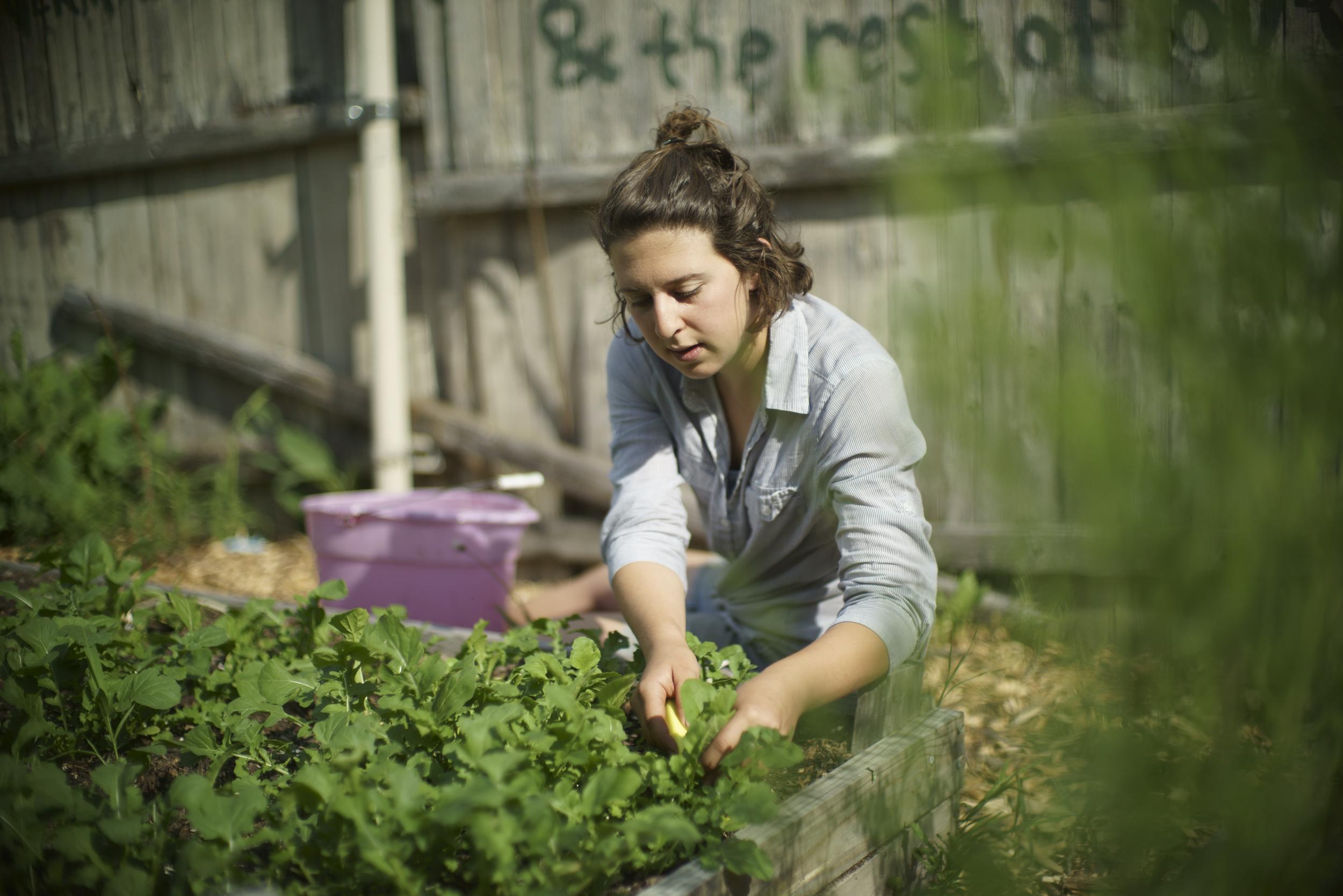 Sarah-harvest.jpg