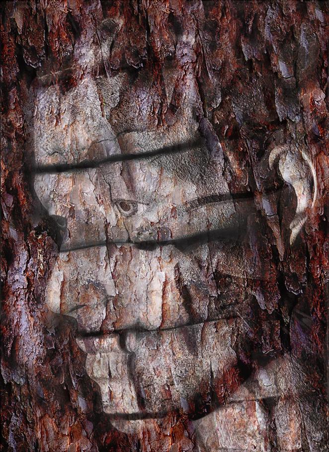 wood8.jpg