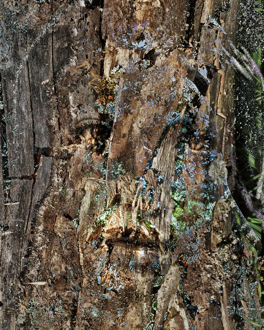 wood34a.jpg