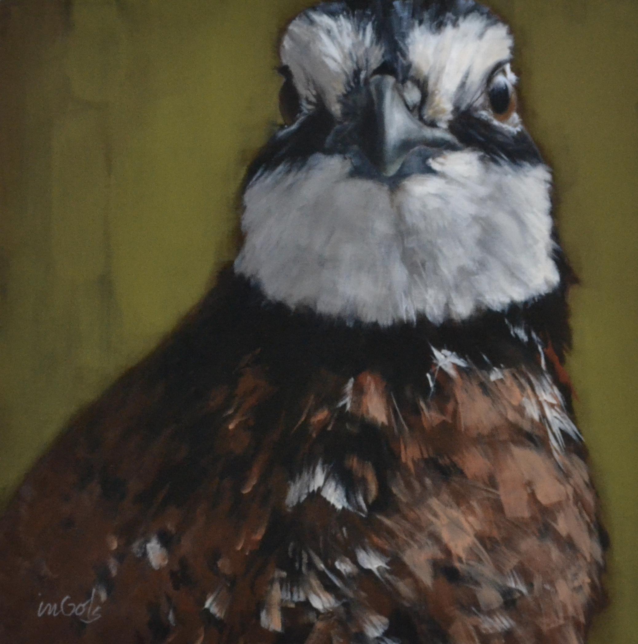 Jane Ingols Art, 18x18
